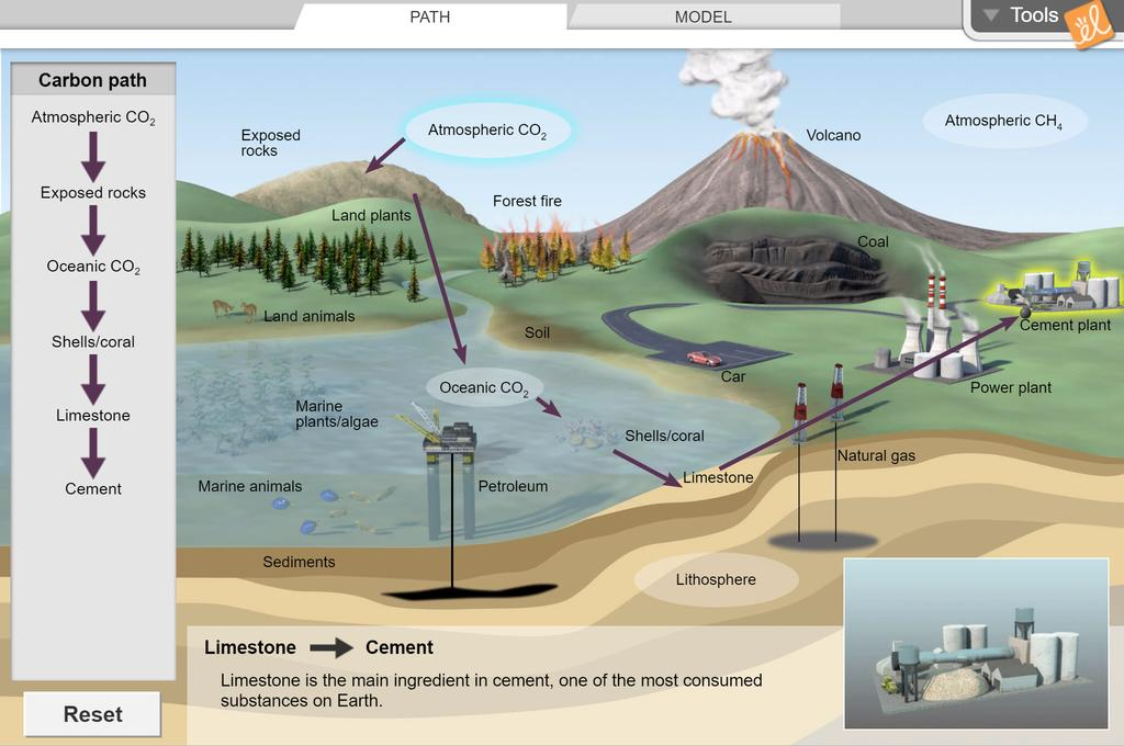 Screenshot of Carbon Cycle Gizmo