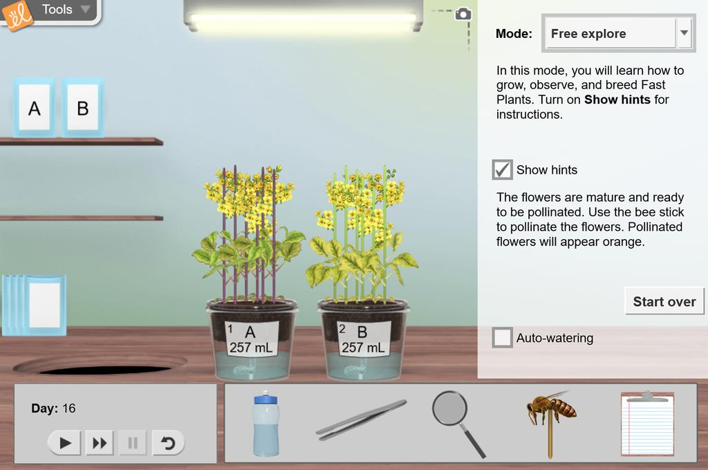 Screenshot of Fast Plants<sup>®</sup> 1 - Growth and Genetics Gizmo