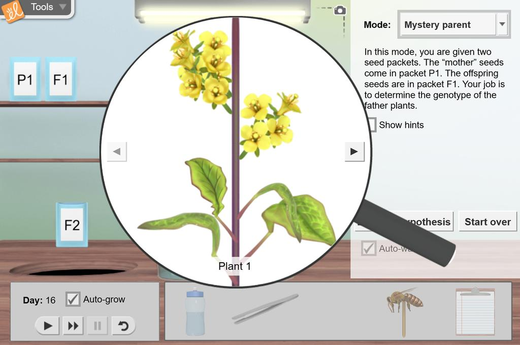 Screenshot of Fast Plants<sup>®</sup> 2 - Mystery Parent Gizmo