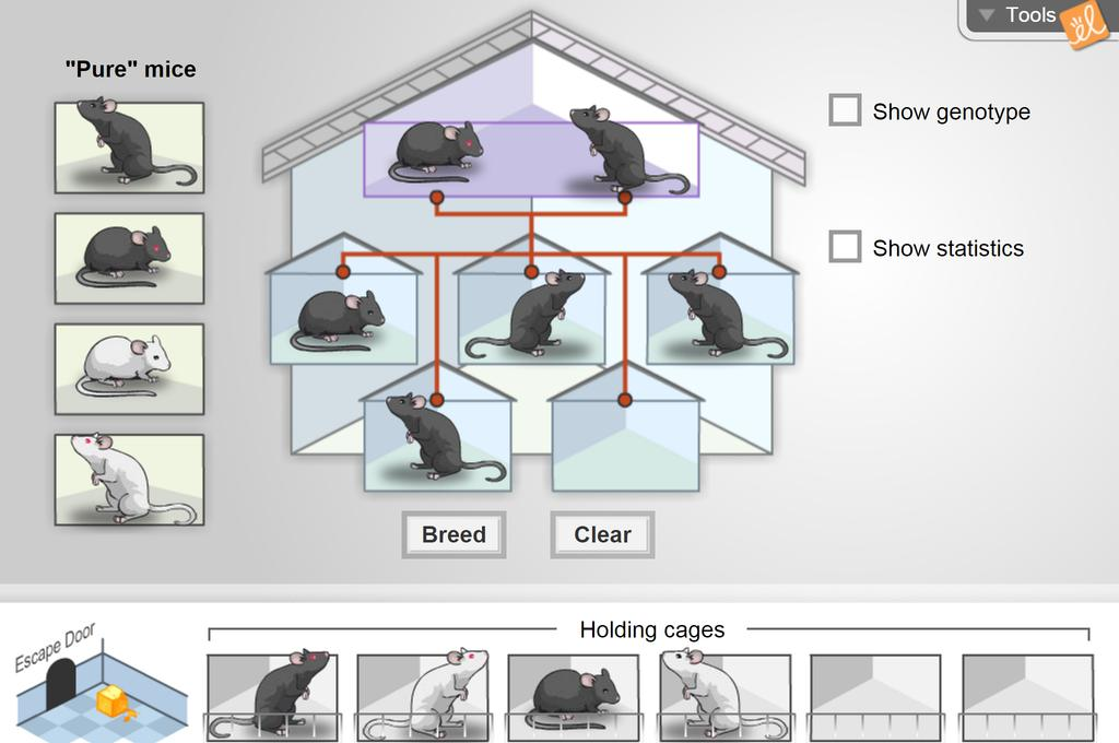 Screenshot of Mouse Genetics (Two Traits) Gizmo
