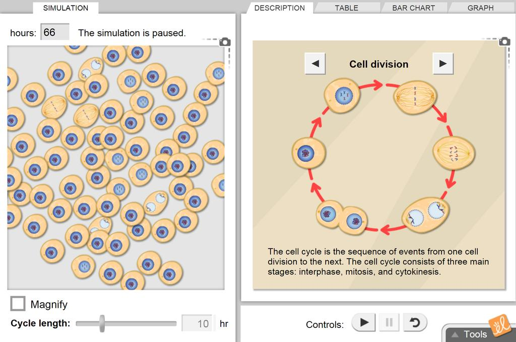 Screenshot of Cell Division Gizmo
