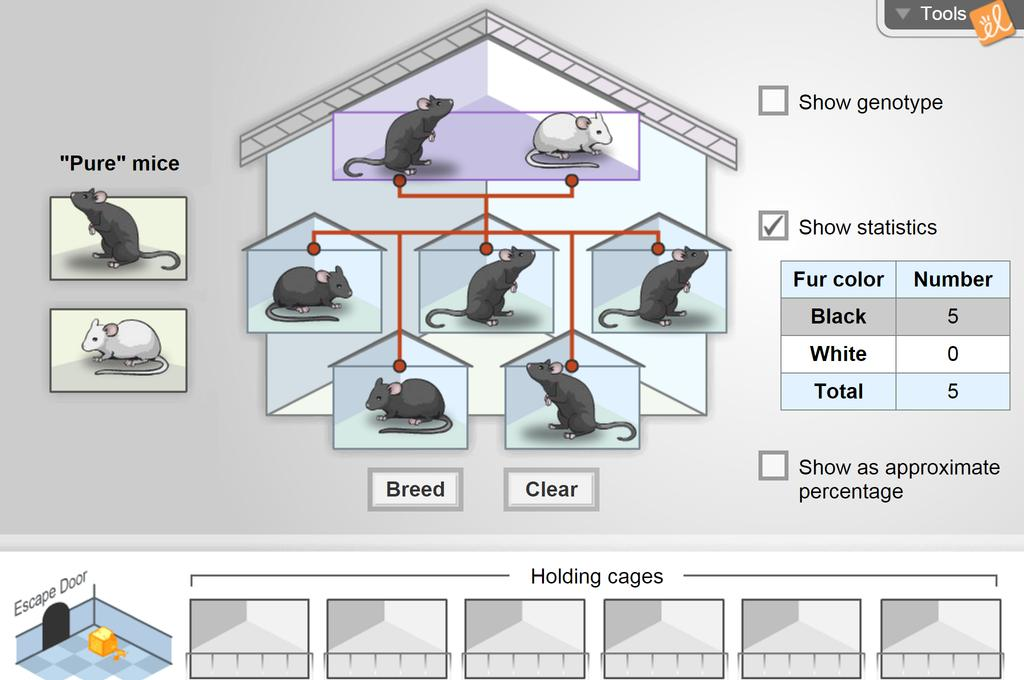 Screenshot of Mouse Genetics (One Trait) Gizmo