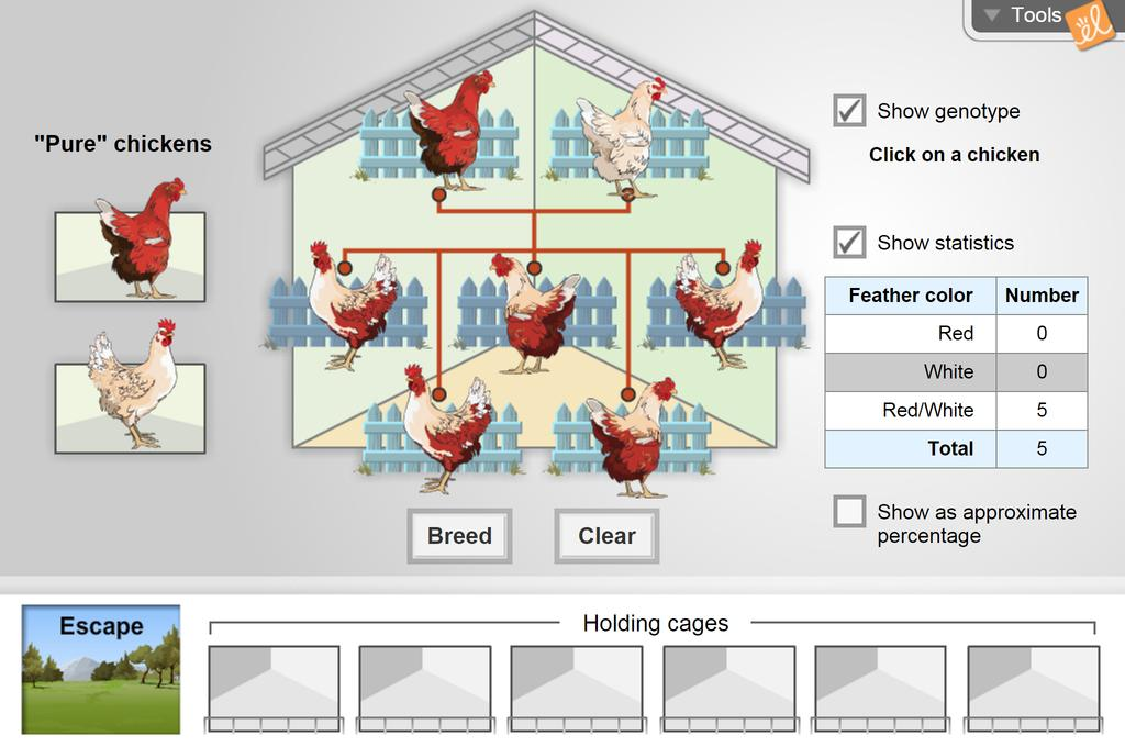 Screenshot of Chicken Genetics Gizmo