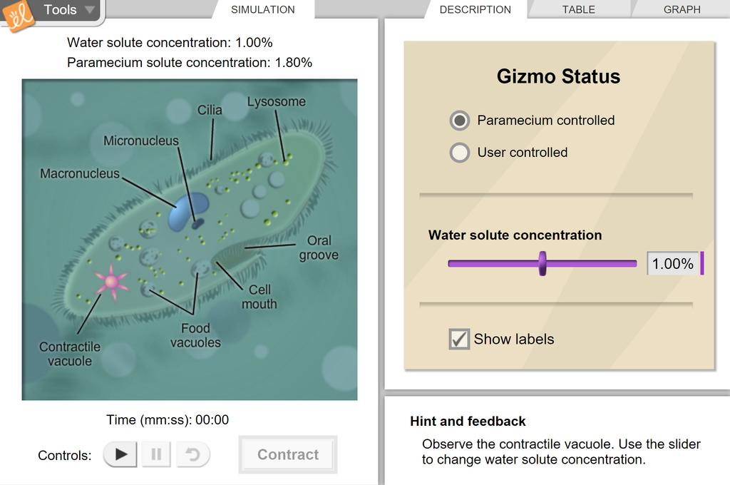 Screenshot of Paramecium Homeostasis Gizmo