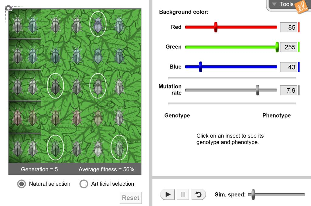 Screenshot of Evolution: Natural and Artificial Selection Gizmo