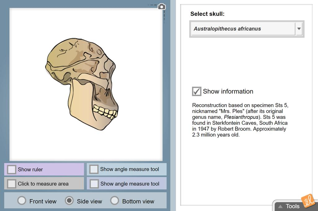Screenshot of Human Evolution - Skull Analysis Gizmo