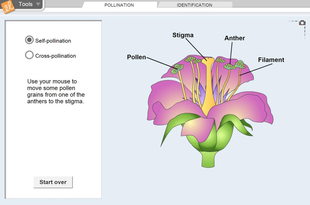 Screenshot of Flower Pollination Gizmo