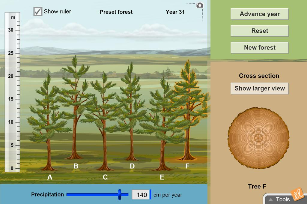 Screenshot of Measuring Trees Gizmo